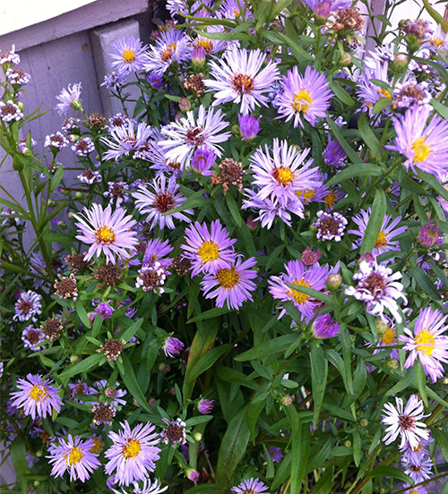 sep9-aster-w